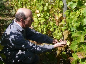 Jean Thevenet inspecting his grapes